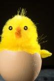 Polluelo del juguete en cáscara de huevo Imágenes de archivo libres de regalías