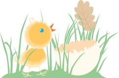 Polluelo en la hierba Imagen de archivo
