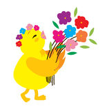 Polluelo lindo Fotos de archivo libres de regalías