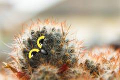 Polluelo lindo del búho con los ojos grandes, inclinados su cabeza, cactus con los ojos y collage del pico Fotografía de archivo