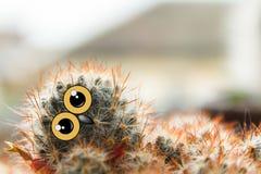 Polluelo lindo del búho con los ojos grandes, inclinados su cabeza, cactus con los ojos y collage del pico Foto de archivo libre de regalías