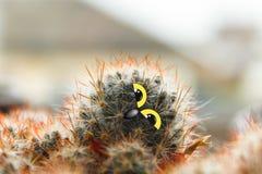 Polluelo lindo del búho con los ojos grandes, inclinados su cabeza, cactus con los ojos y collage del pico Imágenes de archivo libres de regalías