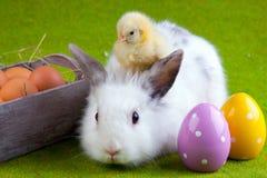 Polluelo y conejo jovenes Fotografía de archivo