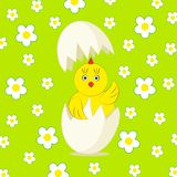 Polluelo y huevo amarillos lindos del vector Fotografía de archivo libre de regalías