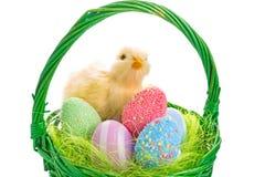 Cesta del polluelo y de Pascua con los huevos Imagen de archivo libre de regalías