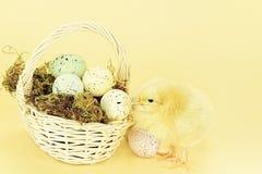 Polluelo y huevos de Pascua fotos de archivo libres de regalías