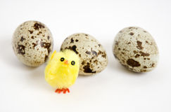 Polluelo y tres huevos Imagen de archivo
