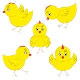 Polluelos amarillos lindos del vector Imagen de archivo libre de regalías