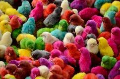 Polluelos coloridos foto de archivo