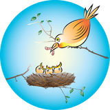Polluelos de alimentación Fotos de archivo