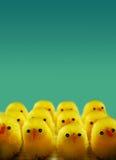 Polluelos de Pascua Fotos de archivo libres de regalías