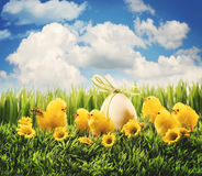 Polluelos de Pascua en la hierba Foto de archivo