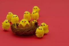 Polluelos de Pascua en la hierba aislada en blanco Imagenes de archivo