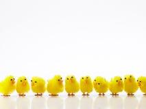 Polluelos de Pascua en una fila foto de archivo