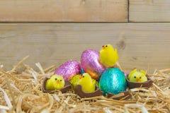 Polluelos de Pascua que traman de los huevos de chocolate Fotografía de archivo