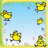 Polluelos felices del bebé listos para Pascua Foto de archivo libre de regalías