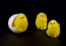 Polluelos y huevo mullidos Fotografía de archivo