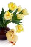 Polluelos y tulipanes Foto de archivo