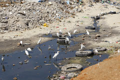 Polluted area Stock Photo