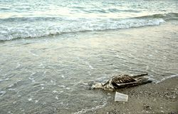 Polluted Black Sea coast in Romania Royalty Free Stock Photo
