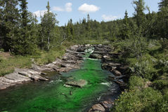 Polluted Creek. With green harmful water stock photo