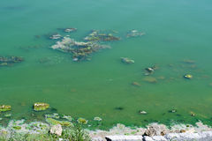 Polluted pond Royalty Free Stock Photo