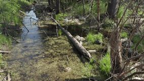 Polluted river bank. ecological disaster.  stock video