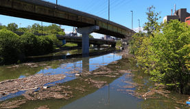 Polluted River royalty free stock image