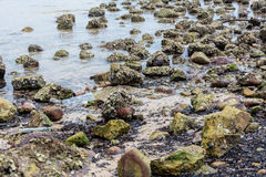Polluted seashore Royalty Free Stock Photo