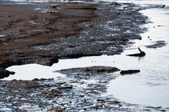 Polluted shore of the reservoir Stock Images