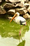 Birds nature. Polluted water in forest poisoined birds stock photos
