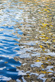 Polluted water and scum Stock Image