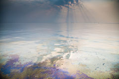 Polluted water Royalty Free Stock Images