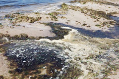 Polluted water on the sea shore Royalty Free Stock Images
