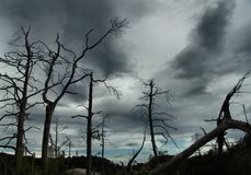 Pollution. Dead trees silhouetted against a stormy sky -  but the horizon shows hope Stock Photography