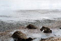 Pollution of the Baltic Sea. Royalty Free Stock Photos