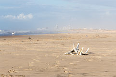 Pollution beach sea shore garbage plastic chair city view. Stock Photography