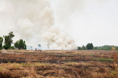 Pollution from the burning of rice fields after Royalty Free Stock Photos