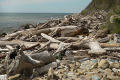 Pollution of the coastline, plastic, plastic bags, garbage - an environmental disaster. royalty free stock photography