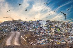 Pollution concept. Garbage pile in trash dump or landfill. Birds flying around