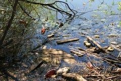 Pollution d'un lac Photographie stock libre de droits