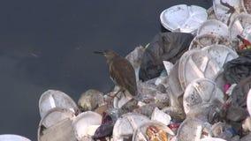 Pollution de l'eau catastrophique en rivière d'Âgrâ, Inde banque de vidéos