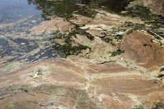 Pollution de lac Images stock