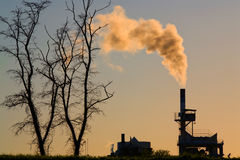 Pollution and dead tree Royalty Free Stock Photography