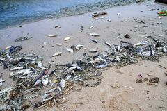 Pollution. The image of the water pollution  at local beach Royalty Free Stock Photography