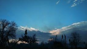 pollution 4k atmosphérique en parc national Fumée sur le fond des arbres banque de vidéos