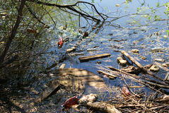 Pollution of a lake. Environmental pollution with plastic bottles and other waste on a small forest lake royalty free stock photography
