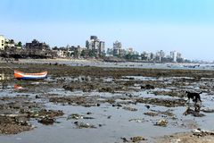 Pollution of The Mumbai Sea Beach Royalty Free Stock Photography