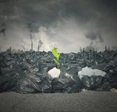 Pollution and new life Stock Photography