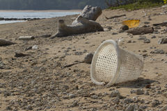 Pollution Of Coastal Ecosystems, Natural Plastic Stock Image